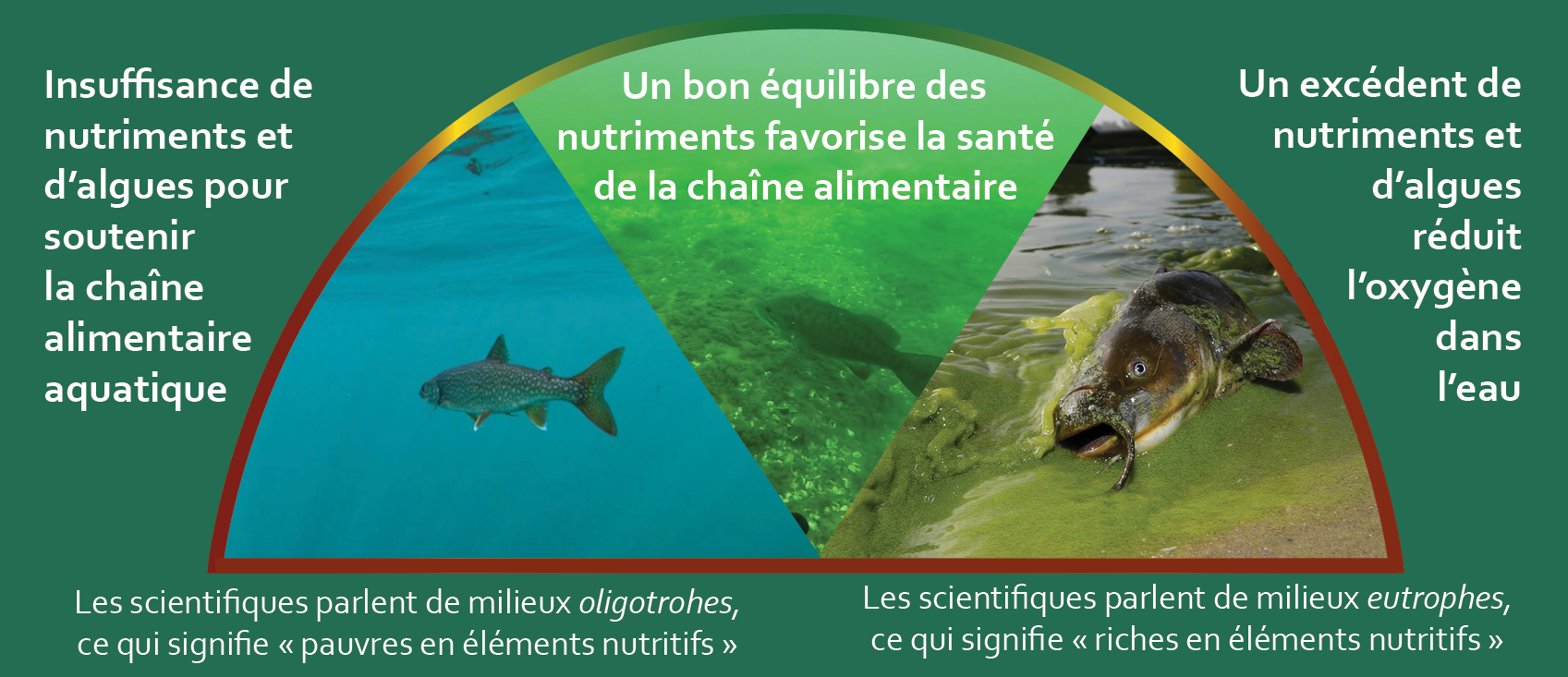 nutrients french