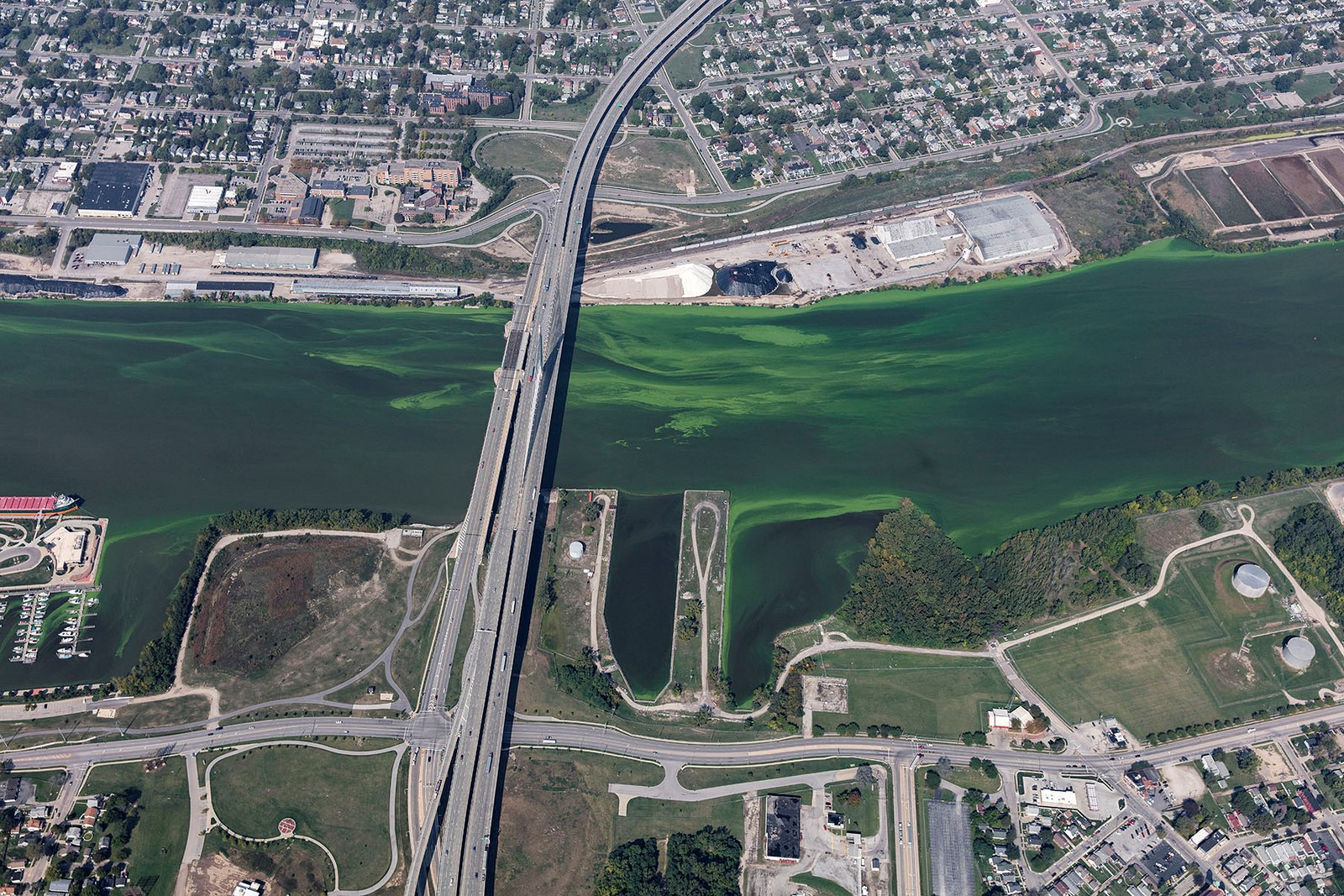 harmful algal bloom maumee