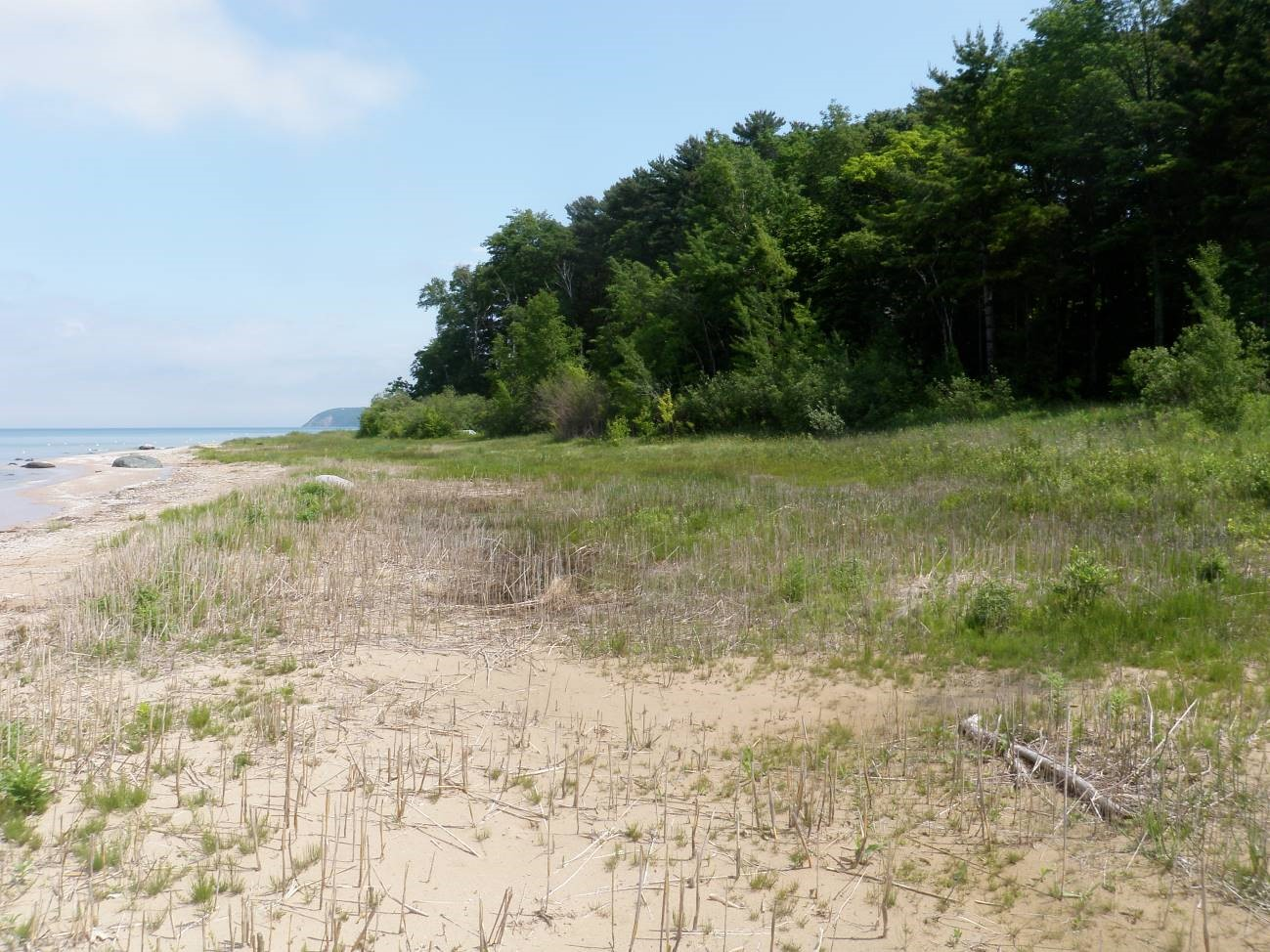 The same location in the Lighthouse Preserve after Phragmites was removed. Credit: Shaun Howard/Leelanau Conservancy