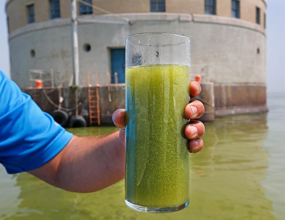 Efflorescences de cyanobactéries à une prise d'eau potable située dans le lac Érié