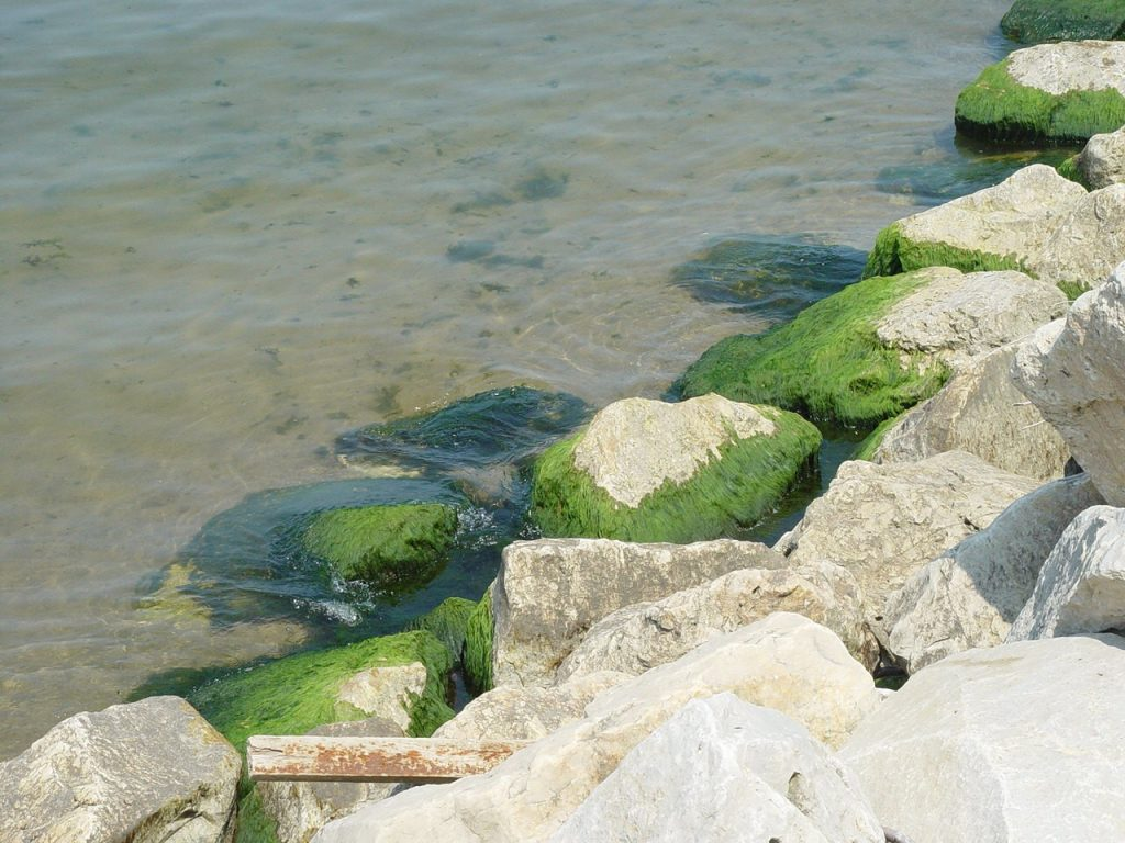 invasive mussels nutrients