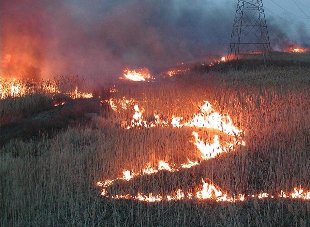 phragmites burning collaborative michigan dnr
