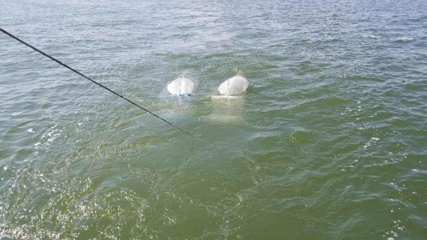 plankton algae saginaw bay