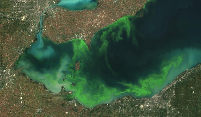 harmful algal bloom lake erie algae satellite noaa