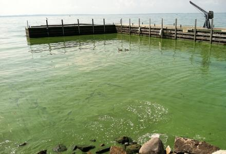 Algal bloom in Lake Erie, Kelley's Island, October 2011