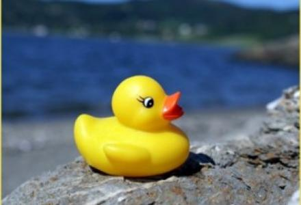 Water Matters - Rubber Ducky at edge of water