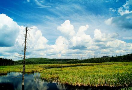 wetland marsh lake superior