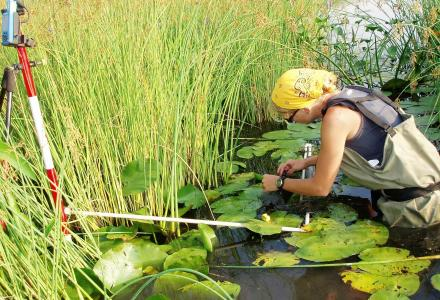Water Matters - Biologist conducting wetland monitoring