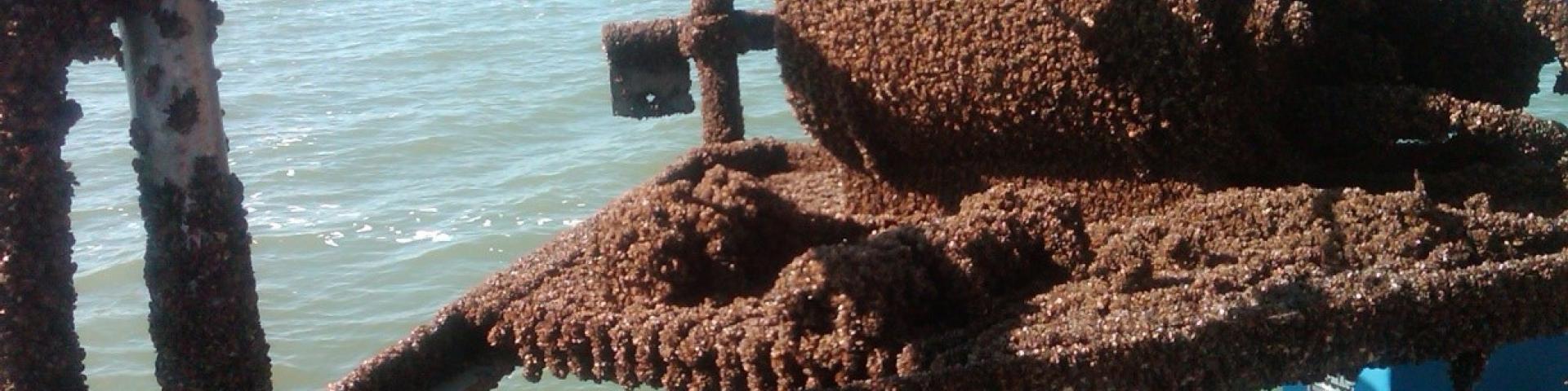 lake michigan mussels