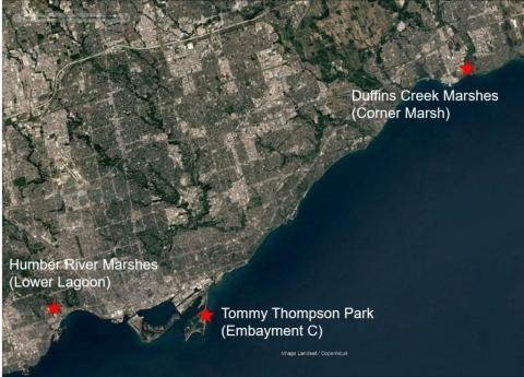 three wetlands toronto shoreline
