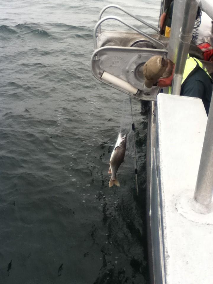 usgs kato lake ontario trout