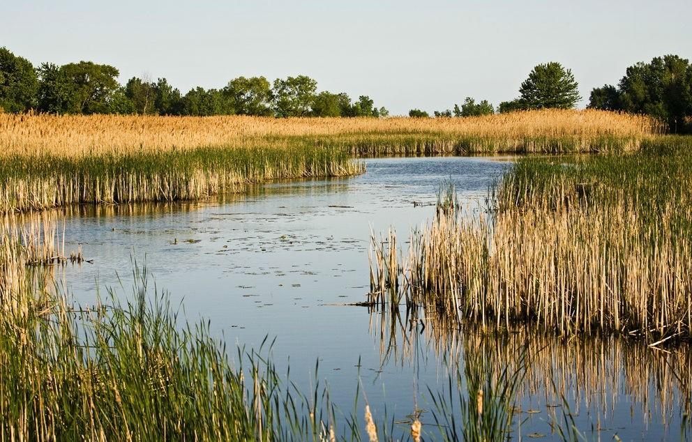 wetlands lake erie